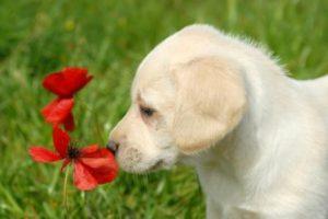 Hundehaftpflichtversicherung-Versicherungslexikon